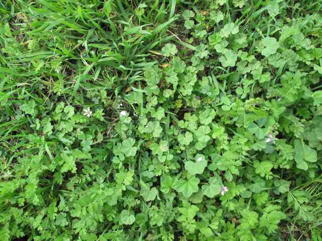 How To Clear A Vegetable Garden Full Of Weeds