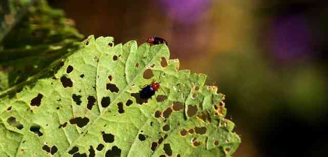 How To Get Rid Of Vegetable Garden Pests
